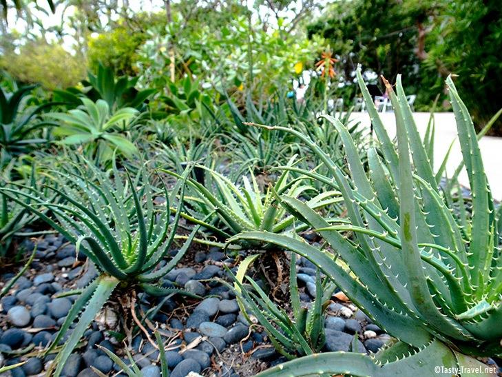 Botanischer-Garten-Aloe-Vera