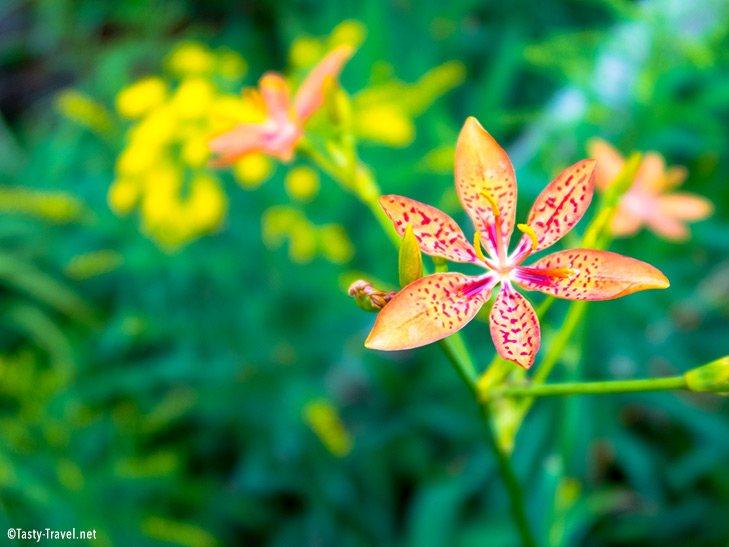 Botanischer-Garten-Bunte-Pflanze