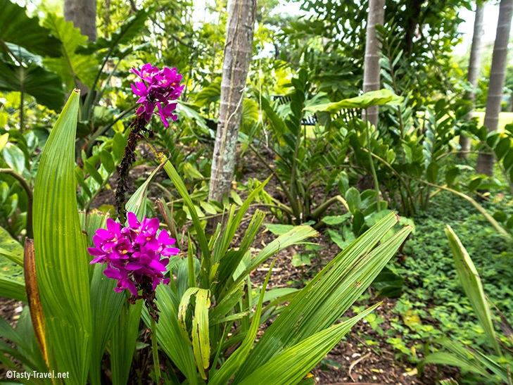 Botanischer Garten Miami