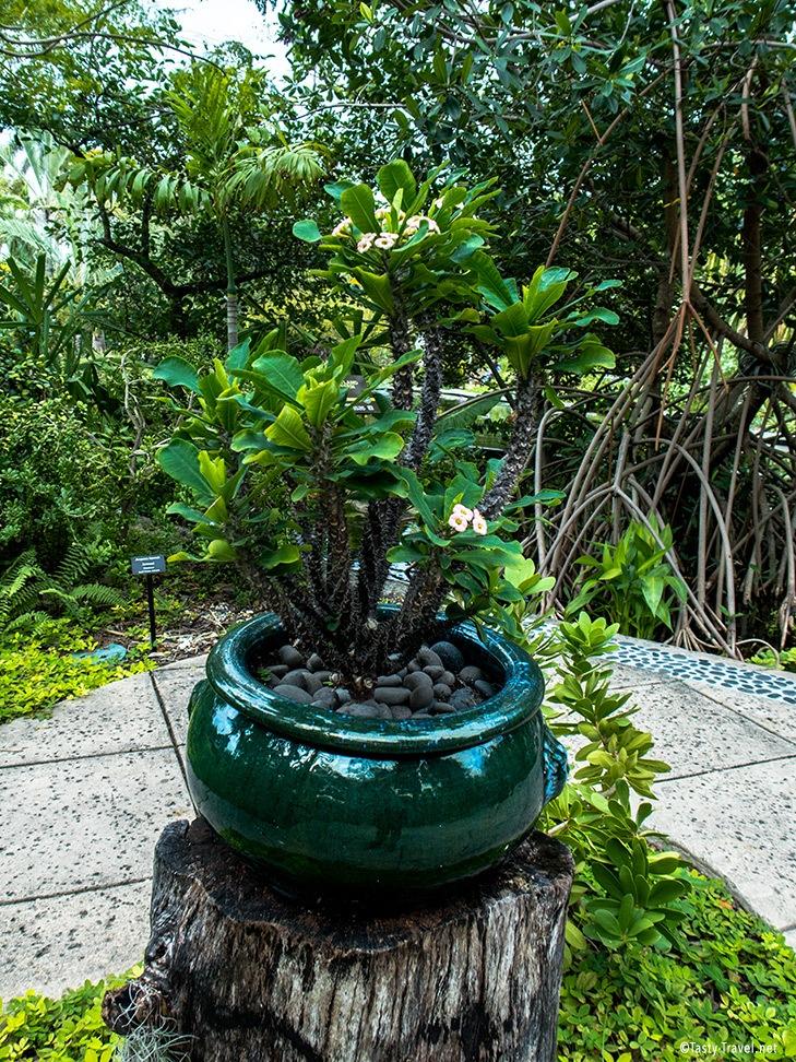 Botanischer-Garten-Miami Topfpflanze