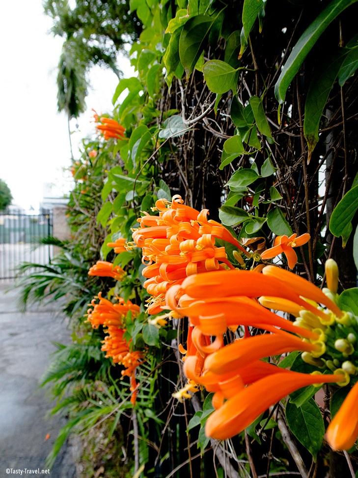 Botanischer-Garten-Wandpflanze