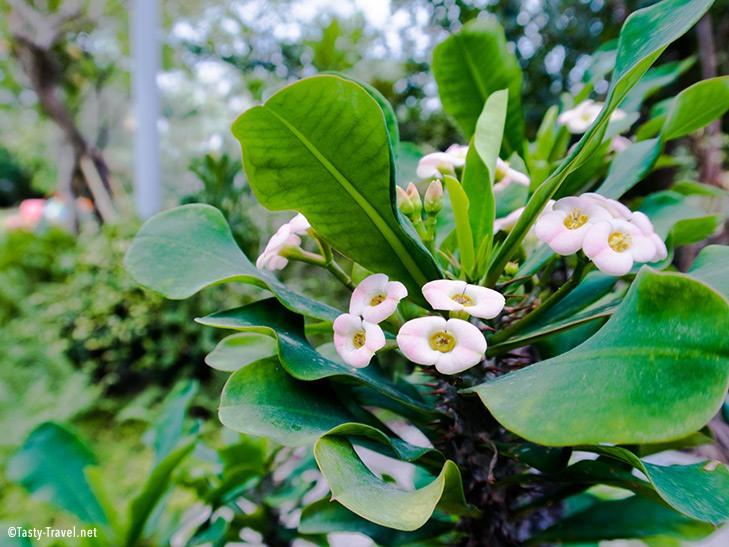 Botanischer-Garten-kleine-Pflanze